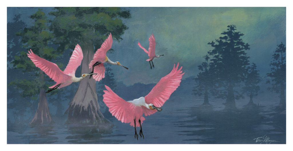 Spoonbills at south fork
